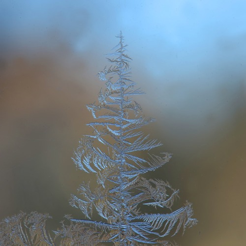 Winter's Wisp