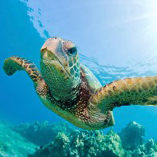 TRAVISWILD's Animal Kingdom Radio 009 - Sea Turtle