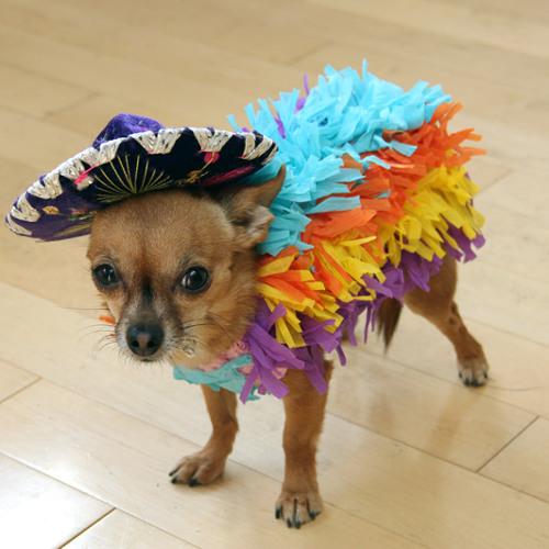 Spirit of Mexico [160 BPM]