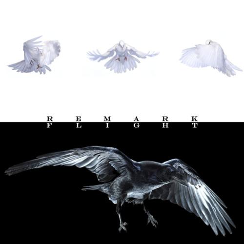 Remark Back Catalogue: Flight (Early 2009)