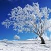"Antonio Vivaldi - 'Largo' from ""Winter,"" from ""The Four Seasons"""