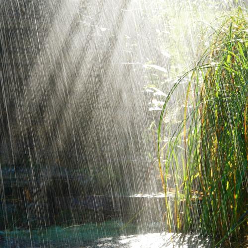 Dj Dan - November Rain - 2013