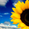 Free Psychic Class - Grounding and Golden Suns by Dr. Lauren (GS-01)