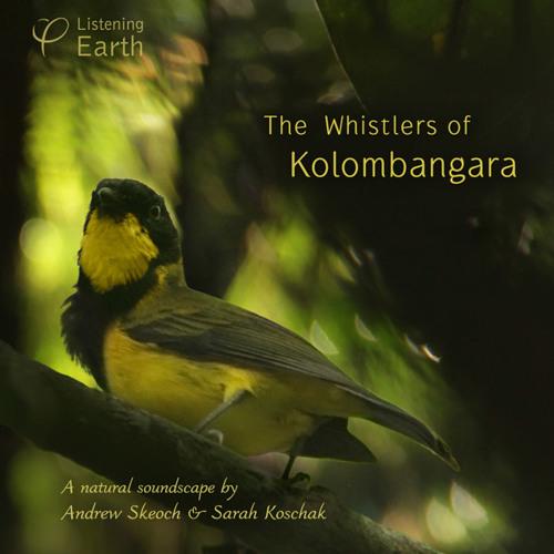 Andrew introduces the Golden Whistlers of Kolombangara Island