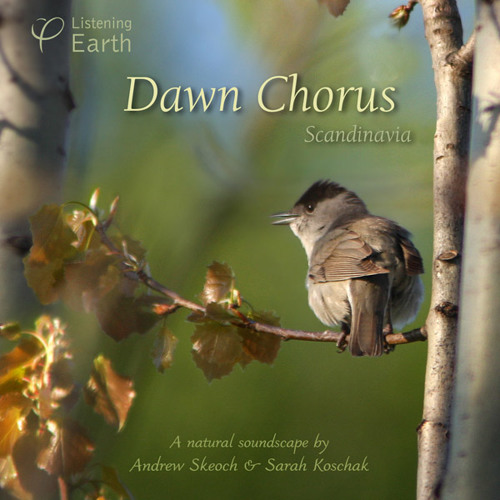 'Dawn Chorus: Scandinavia' - album sample