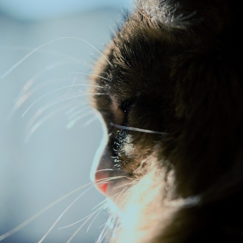 Feline (not album ver. edit) - T.Pyrdol