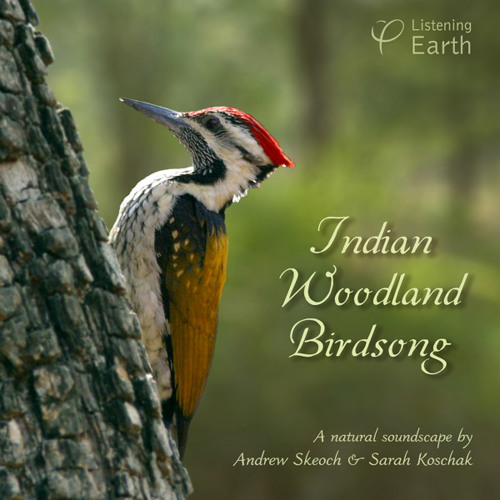 'Indian Woodland Birdsong' - album sample