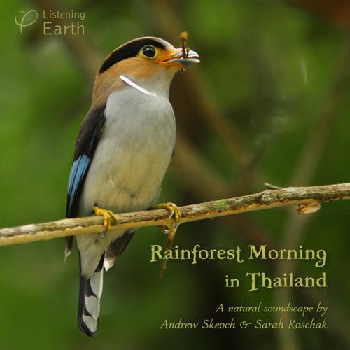 'Rainforest Morning in Thailand ' - album sample