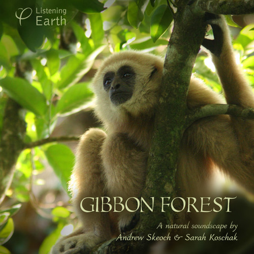'Gibbon Forest' - album sample