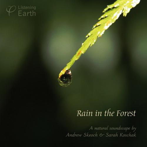 'Rain in the forest'- album sample
