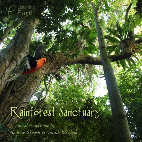 'Rainforest Sanctuary'- album sample