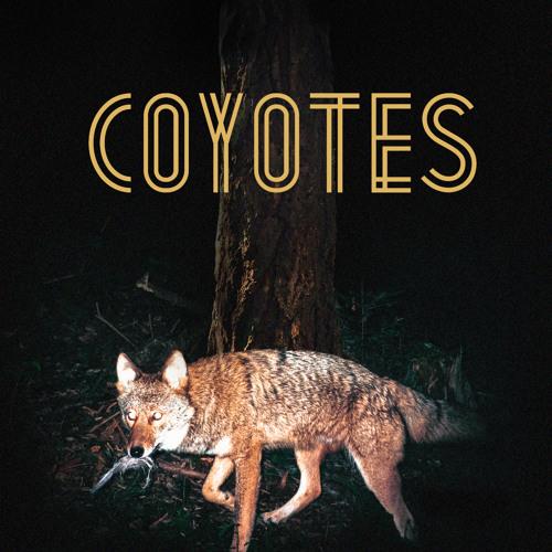 Programa Arrastão Cultural: Entrevista com a banda Coyotes