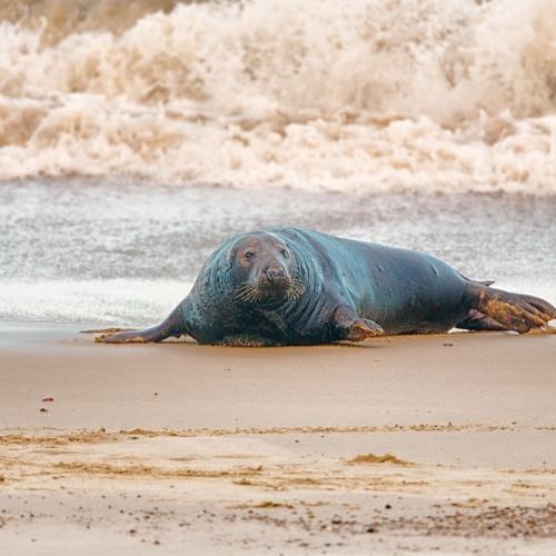 Sea and Seals