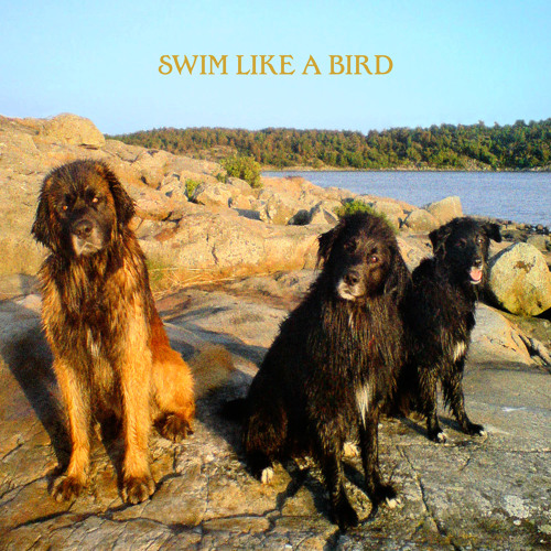 Ebbot Lundberg - Swim Like A Bird