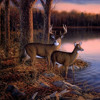 Deer Hunting Man