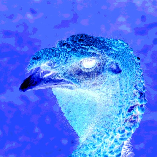 The Morning Jive Turkey Part 1 (Electronic)