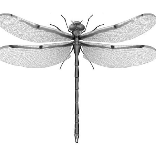 Dragonfly - A.L.S.X.. - PsyD Show rmx (remix contest)