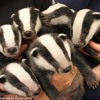 ILLINOISE and BADGER BABY - Mvmts. 3, 4 from