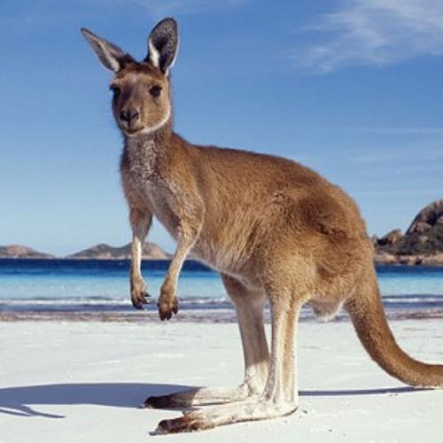 TRAVISWILD's Animal Kingdom Radio 010 - Kangaroo