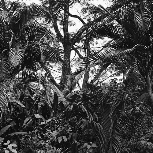 Petit Gateau - Electronic Jungle (Free download)