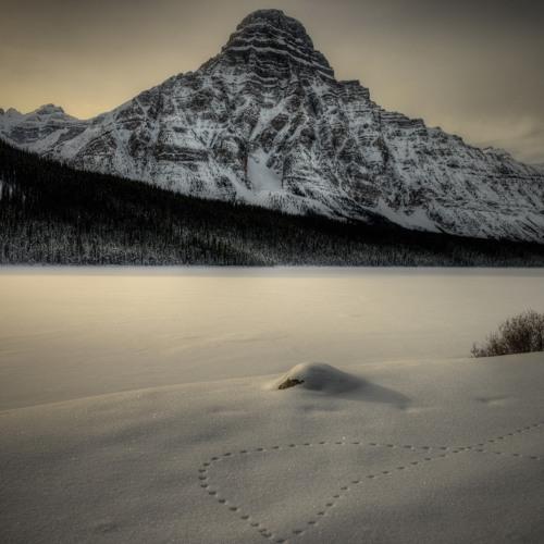 Wolftek - Snowtrails