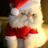 Christmas songs remix