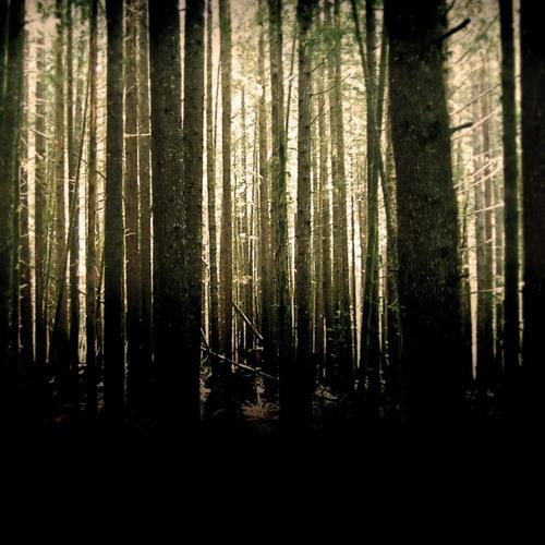 Mark Slee - Kindling: The Woods [December 2013]