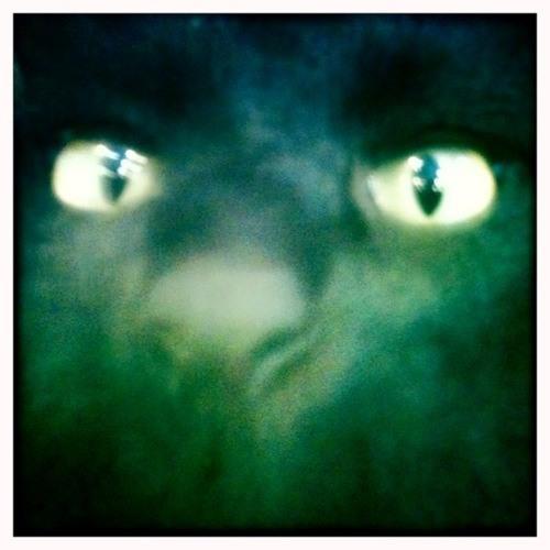 Meow Papa [Iconoclast, Tk 2]