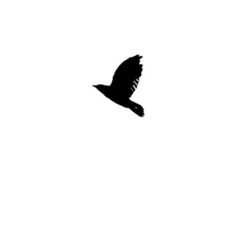 Homebird - Rónán Kearney