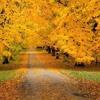 Larch – 13 Days To Autumn