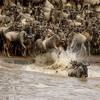 Miles Across The Serengeti