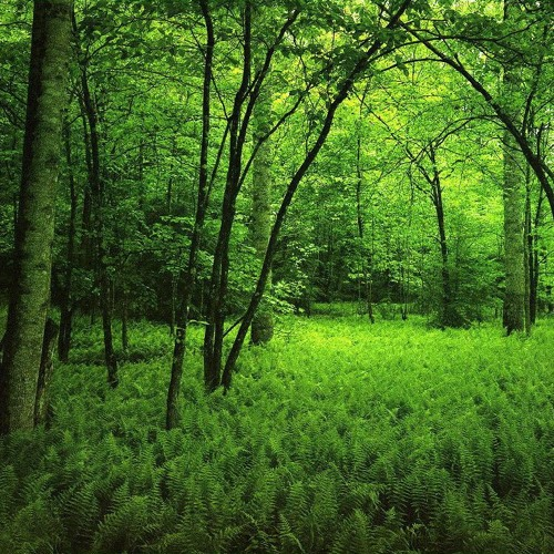 Cosmogonia (Voudun) (Forest Demo 4 Tracks abstract)