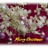 O Holy Night - Traditional Christmas Carol