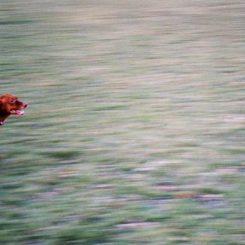 wake up, little sparrow (e. jenkins)