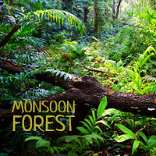 Monsoon Forest (Fogg Dam, Australia) - Album Sample