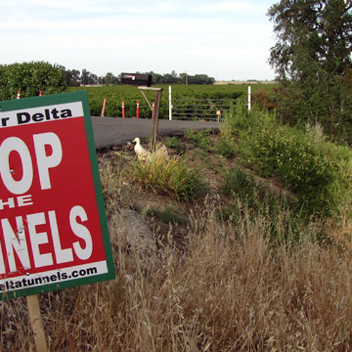 Money, Environmental Concerns Could Sink Governor's Delta Water Plan