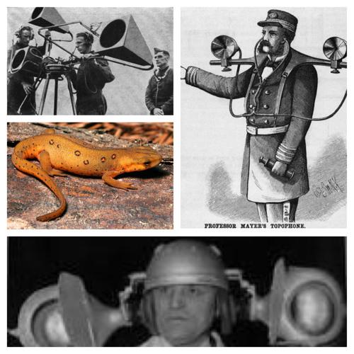 Yellow Salamand'r 4 - Salamandrid Sonic Toxin