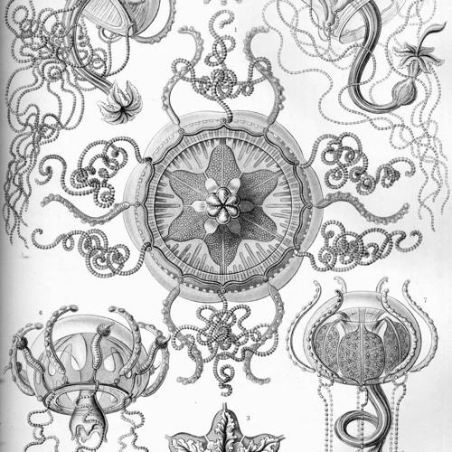 Medusa (Jellyfish)