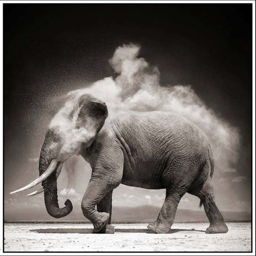MENTALO - Animal (FREE DOWNLOAD)
