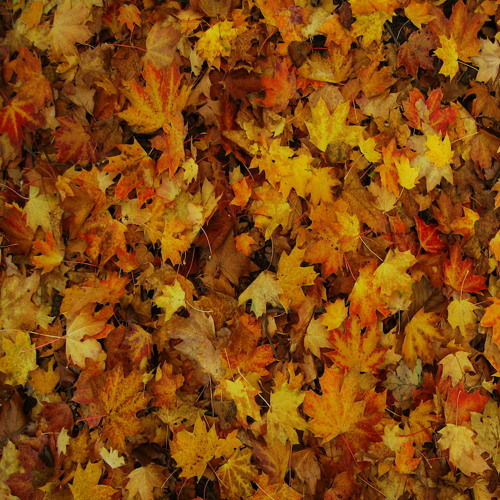 "Thomas Leyh ""Autumn Leaves"" (Free Download)"