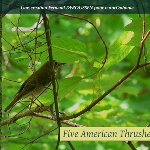 """Five American Thrushes_22'38"""""""