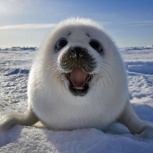 Seals (WIP)