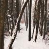 Ólafur Arnalds - For Now I Am Winter (remix thing)