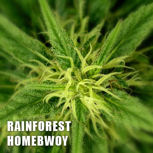 Rainforest - Homebwoy ( Free Tune )