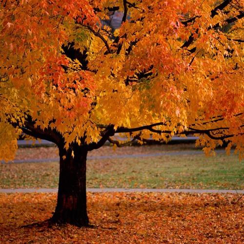 tons d'automne (.xm)