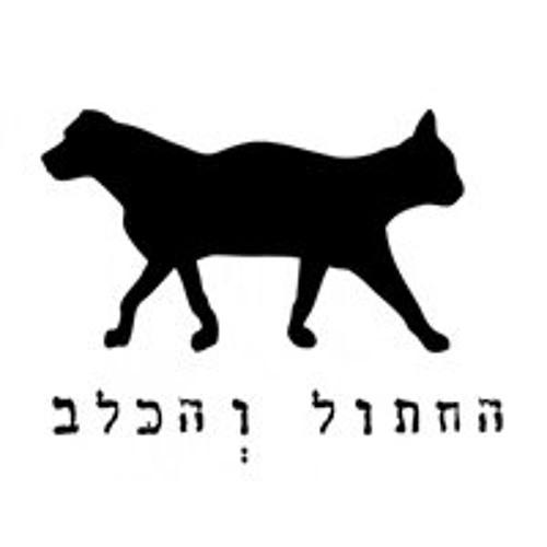 Graziano Raffa @ The Cat & The Dog, Tel Aviv - 06.12.2013