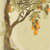 Mango Tree -Angus and Julia Stone