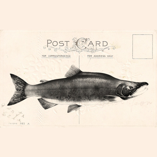 Postcards from Salmon(Matina Sous Peau Mashup)