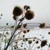 Winter'stune