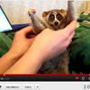 Youtubefame